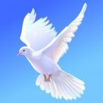Мир Окон